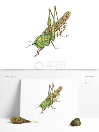 手绘昆虫蝗虫可商用元素