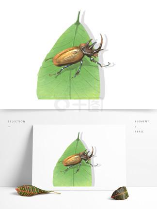昆虫元素手绘中国风屎壳郎?#35813;?#24213;可商用素材