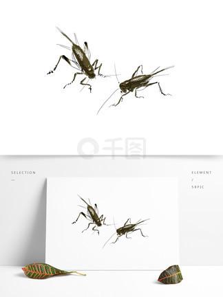 手绘昆虫油葫芦可商用元素