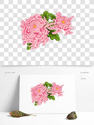 ?#21482;?#23047;嫩灿烂盛放粉菊原创免抠设计元素