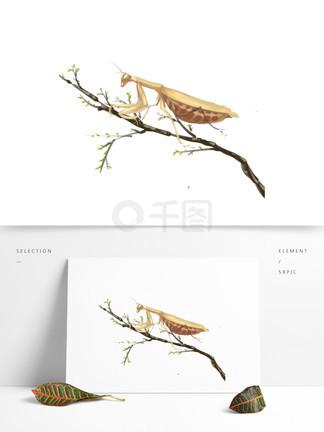 手绘中国风螳螂树枝昆虫?#35813;?#24213;可商用素材