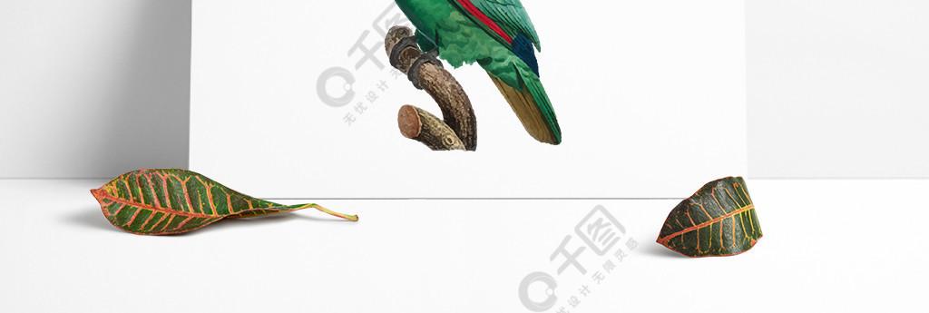 鸟类鹦鹉手绘矢量彩色绿色元素