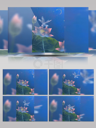 独特透明感插画动效(荷花蜻蜓)