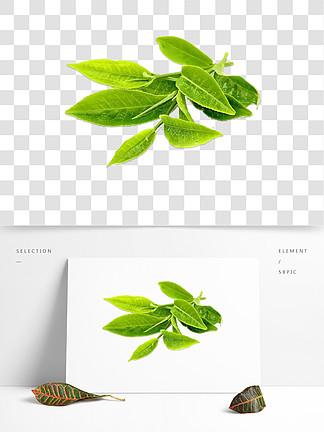 绿色叶子装饰素材