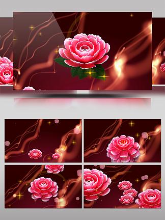 牡丹花背景视频素材