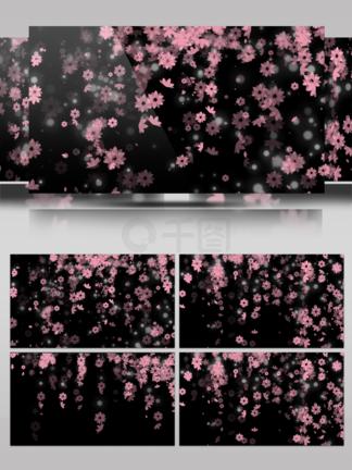 10s带通道花朵花瓣飞舞视频元素