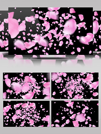 无尽的花瓣长廊透明通道素材AE模板