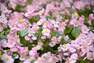 植物鮮花草攝影圖