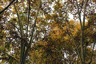 秋日公園林木風景圖
