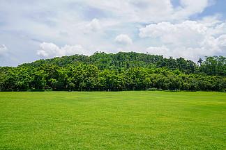 清新綠色草地樹林天空