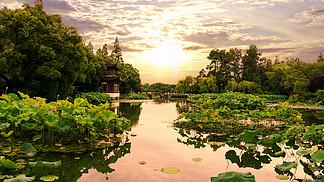 西湖黃昏小橋荷花池
