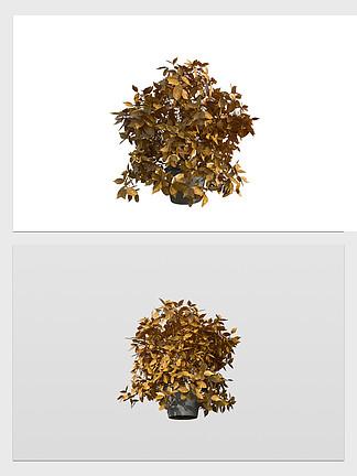 3d花草盆景模型