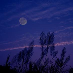 佛山户外芦苇草宁静月圆之夜