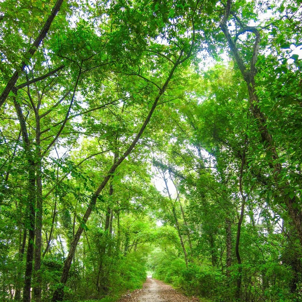 一條樹林茂密的林蔭小道遠景