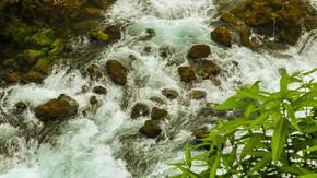 山间溪水流动的小溪很多鹅卵石植物山水自然