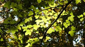 春季生机勃勃的绿色植物树木长出绿叶新绿