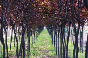 整齐的红树木林园