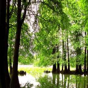 午后平静池塘上小树林与倒影