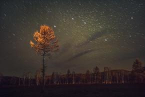 阿尔山森林夜晚公园星空