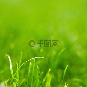 春天绿色小草草丛