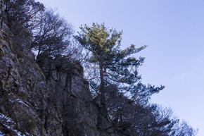 风景名胜尧山古树自然风光摄影图