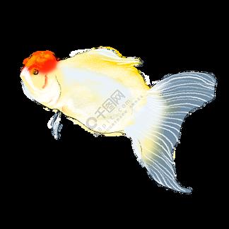 3D立体金鱼<i>电</i><i>视</i><i>背</i><i>景</i><i>墙</i>画JPG