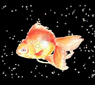 手绘水彩金鱼png