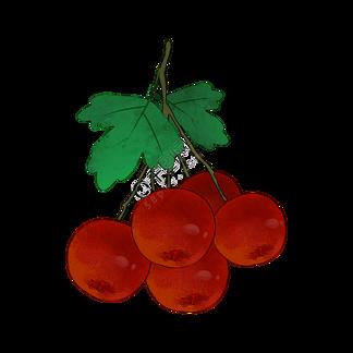 一挂山楂水果食物PNG素材