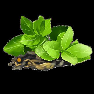 茶叶茶具纯天然倒影筛选新的茶叶绿色刚采的茶叶