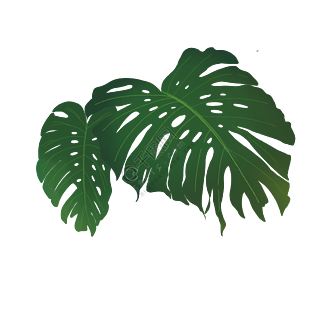 热带植物叶片免抠PNG