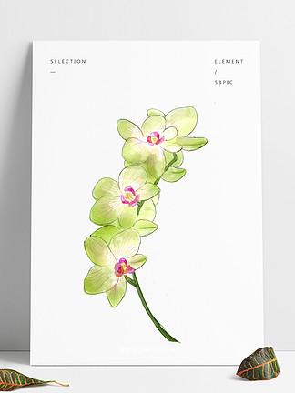 手绘水彩花朵装饰png