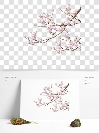 中国风手绘玉兰花