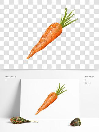 手绘蔬菜胡萝卜插画
