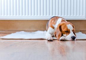 狗已接近暖散热器休息