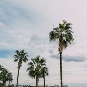 靠近地中海的绿色棕榈树,与天空的云彩相映衬