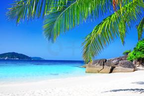 热带棕榈树的白色沙滩