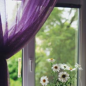 在窗户上的洋甘菊的美丽花束