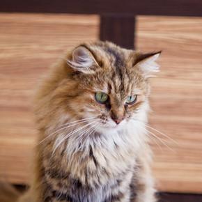 只毛绒绒的猫