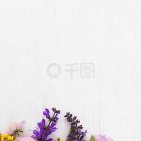 自由空间的多姿多彩的领域鲜花花束