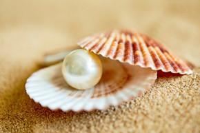 在海滩上开的贝壳珍珠