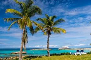 绿色的棕榈树在阳光明媚的海滩上