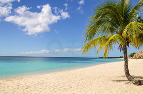 异国风情沙滩的棕榈
