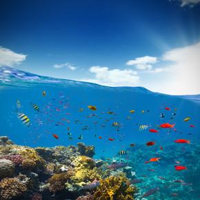 水下珊瑚礁与地平线和水浪