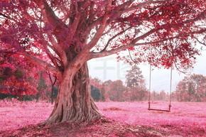 秋千上树,粉红色想象森林