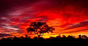 非洲日落在南非克鲁格国家公园