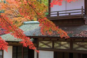 秋叶在日本横滨三溪园,横滨市神奈川县