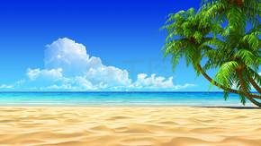 Palms on empty idyllic tropical beach