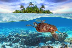 绿海龟水下
