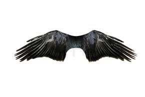 在白色的翅膀