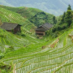 龙胜中国稻田